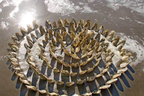 2016 krachtwiel van sepia's 27 april b